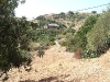 Land  - Copyright Costa Tropical Properties 5000 square metres of virtually flat land.